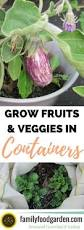 Vegetable Garden Containers by 11 Best Container Gardening Images On Pinterest Gardening