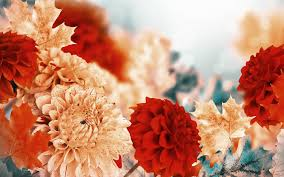 flowers fall flowers leaves chrysanthemums autumn flower desktop