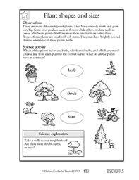 1st grade 2nd grade kindergarten science worksheets plant