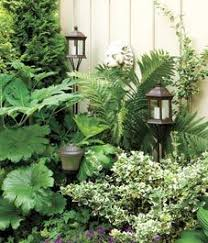 393 best tropical garden images on pinterest gardening plants