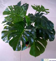 decorative indoor plants 2018 turtle leaves plants artificial tree plants home decoration
