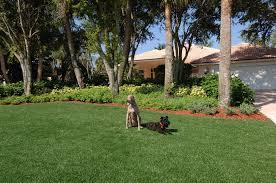 best grass killer home improvement design and decoration all