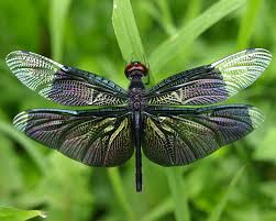 dragonflies forums at psych central
