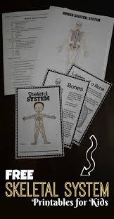 free skeletal system worksheets kids