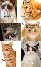 Tardar Sauce Meme - why tardar sauce is grumpy grumpy cat know your meme