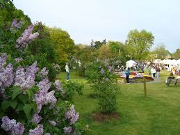 rochester lilac festival wikipedia