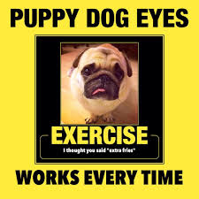 Puppy Eyes Meme - pug exercise workout puppy dog eyes meme motivational poster