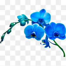blue orchid flower orchid flower png vectors psd and icons for free pngtree