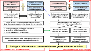 100 transgenesis and the management of vector borne disease