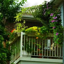 the 6x8 garden balcony garden inspiration u2014 clematis trellis