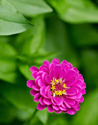 flower garden design beautiful vegetable and flower garden
