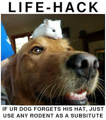 Rodent Meme - we funny cats dog hat life hack just use a rodent