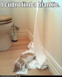 Toilet Paper Funny Funny Cats Toilet Paper Dump A Day