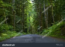 Deep Forest Green Road Through Deep Forest Olympic National Stock Photo 114659242