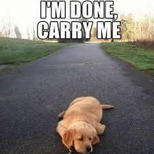 Long Day Memes - animal memes carry me wattpad