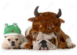 english bulldog halloween costumes halloween frog stock photos u0026 pictures royalty free halloween