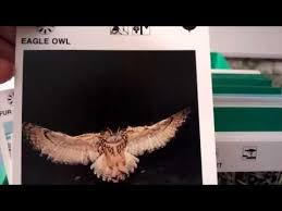 wildlife treasury cards illustrated wildlife treasury box