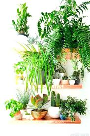 plantes dans la chambre plantes depolluantes chambre a coucher mettre une plante dans sa