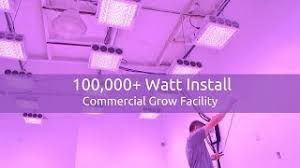 commercial led grow lights black dog led viyoutube com