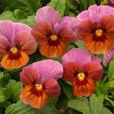 17 best 2017 edible flower garden images on pinterest edible