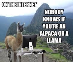 Llama Meme - no drama just llama meme by temox1 memedroid