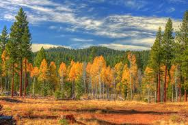 California forest images Lassen national forest about the forest jpg