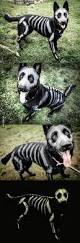 Toxic Halloween Costumes Amazing Dog Halloween Costumes 2016dog Amazing