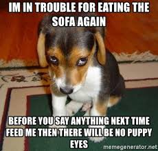 Me Next Time Meme - im in trouble for eating the sofa again before you say anything