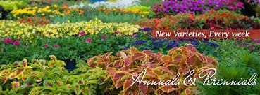 Tallahassee Flower Shops - flower gardens annuals u0026 perennials tallahassee