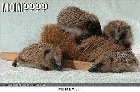 Hedgehog Meme - hedgehog babies meme