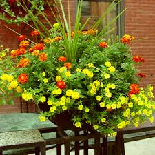 buy flower seeds packages online at nursery live largest plant