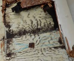 Cost To Remove Mold In Basement - mold remediation faqs frequently asked questions