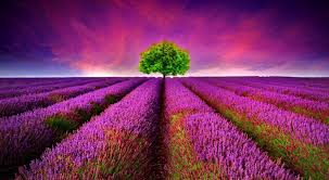 beautiful nature wallpapers hd images beautiful nature collection