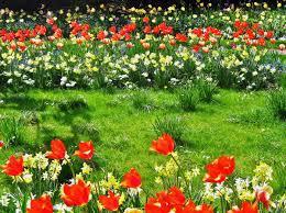 enjoy growing an actual flower garden in your home