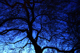 blue nature photography winter tree blue sky