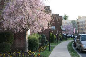 Fern Rock Garden Apartments Regency House Apartments Philadelphia Pa East Oak