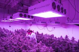 best led grow lights high times 2017 commercial led grow lights a case study comparing led with hps