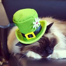irish cat top hat st patrick u0027s day shamrock hat pet top hat