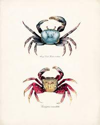 vandy u0027s stuff u2014 crab art print red and blue mango crabs natural