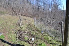 spring or not grow appalachia