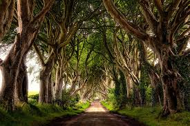 brown tree the stunning tree tunnel you saw on of thrones is real and