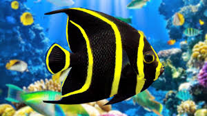 coral reef aquarium u0026 the best relax music 2 hours sleep music