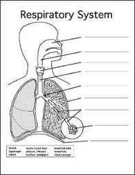 respiratory system respiratory system worksheets and human body