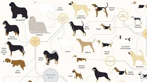 all types of dogs in the world with name