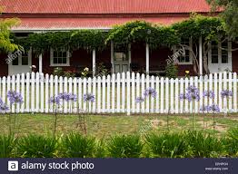 detail of a tin roofed house with porch white picket fence and detail of a tin roofed house with porch white picket fence and agapanthus flowers new zealand