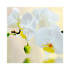compare prices on diy foamiran flower online shopping buy low needlework diy 5d diamond painting flowers white orchid foamiran cross stitch pictures of mosaic dimond