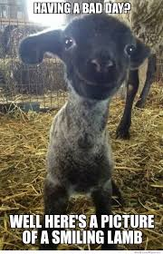 It Gets Better Meme - smiling lamb weknowmemes
