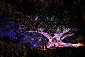 botanical garden in sydney lights up in rainbow colours