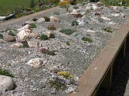growing alpine plants dwarf perennials and miniature bulbs