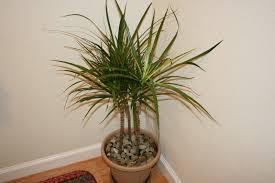 low light tropical indoor the easiest house plants that wonut die